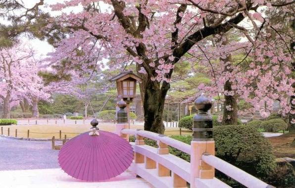http://www.thehighlanderspoems.com/resources/Sakura%20Trees.jpg?timestamp=1255818788843